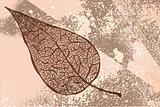 vector vintage autumn leaf on grunge background