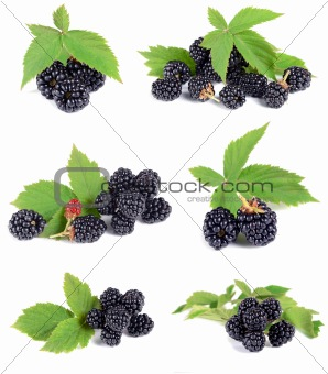 ripe blackberry with green leaves