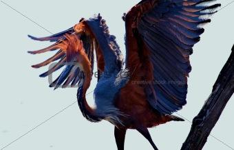 African birds Kruger Park