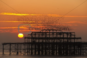 Flock of starlings over the West Pier in Brighton at sunset