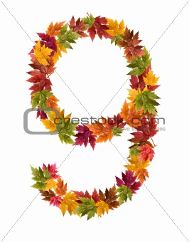 The lnumber 9 made from autumn maple tree leaves