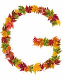 The letter G made from autumn maple tree leaves