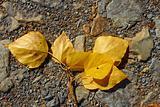 Falling poplar twig