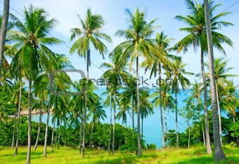 Beautiful beach with palm tree over the sand