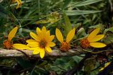 petals love vine