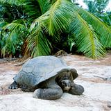 turtle, Curieuse, Seychelles