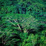 forest, Mahé, Seychelles