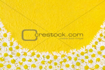 Group of Chamomile flower heads over handmade paper - frame