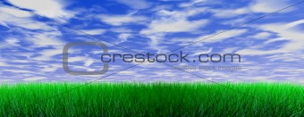 Green color grass