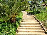 Steps in tropical garden.