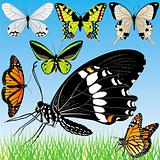 Detailed Butterflies vector set