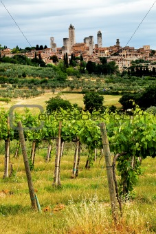 Vineyard in Tuscany