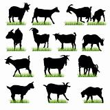 goats silhouettes set