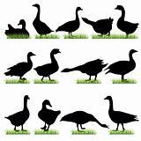 Goose silhouettes set