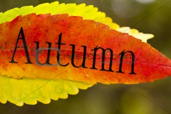 autumn leaves with letters
