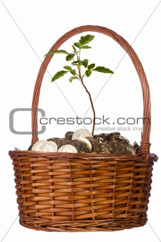 Coins and Plant in a Basket