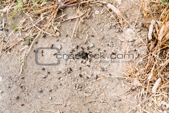 ant colony