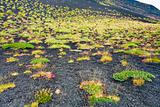 first plants on volcano soil