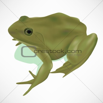 Realistic Frog