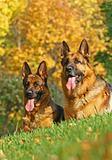 2 shepherds