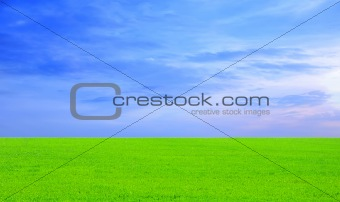 Beautiful green field and sunset sky