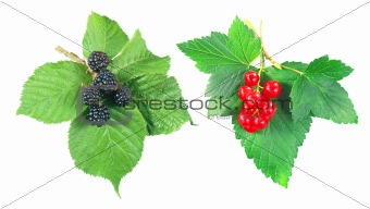 Blackberry and currant with green leaves isolated on white