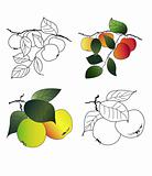 drawing apples branches set