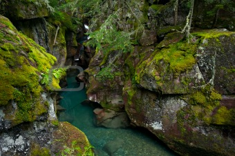 Avalanche Creek Gorge, Glacier National Park, Montana