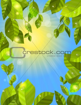 Frame with fresh green leaves