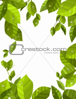 Frame made of fresh green leaves