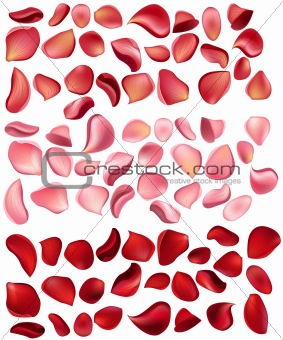 Big collection of  rose petals