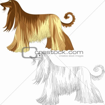 vector set dog Afghan hound breed