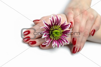 Beautiful hand with perfect nail red manicure
