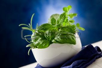 Herbs highlighted by spot light