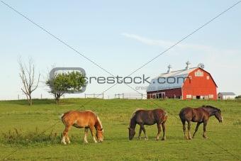 Three horses and a barn