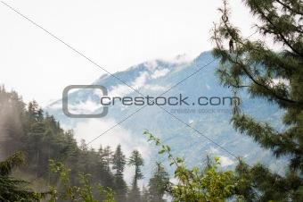 fog after rain in wild forest