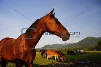 Horse in Cades Cove