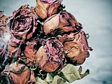 scary dried flowers