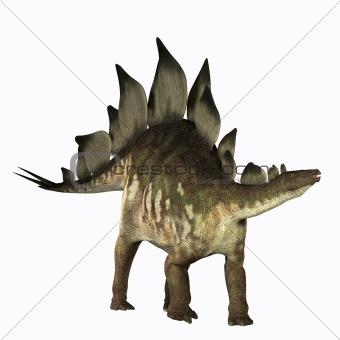 Stegosaurus 01
