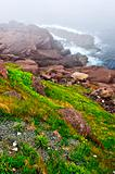 Atlantic coast in Newfoundland
