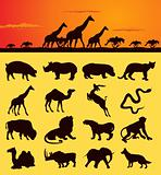 African animals2