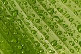 wet banana leaf