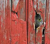 Barn cat