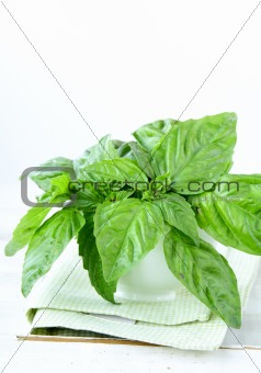 green fresh basil in the glass on the table