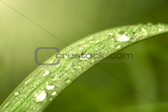 Green leaf with dews in