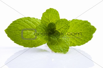 Green Mint on white background