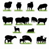 Sheeps silhouettes set
