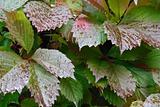 background of green wet autumn leav
