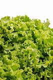 Lettuce salad leaves