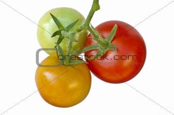 tomato ripe and unripe